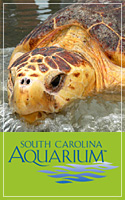 South Carolina Acquarium